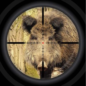 Wild Hog in a scope target